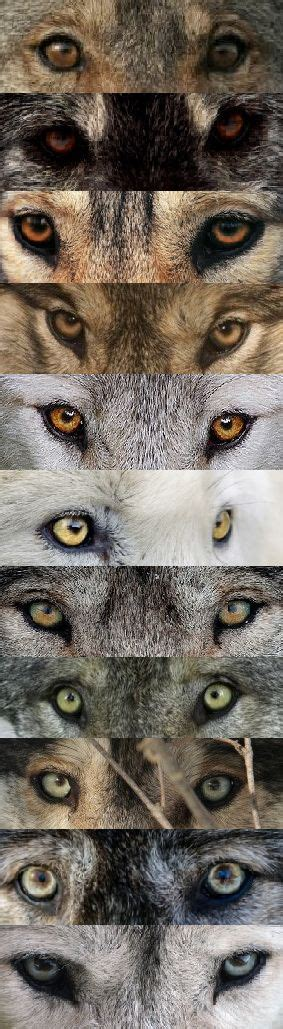 ideas  wolf eyes  pinterest wolves wolf drawings  black wolves