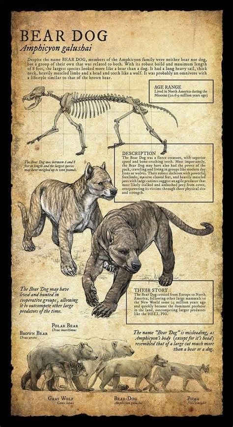 ideas  prehistoric animals  pinterest