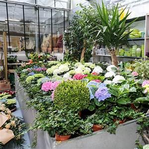Pflanzen Für Schattige Plätze : stiefler gartenbau ~ Orissabook.com Haus und Dekorationen