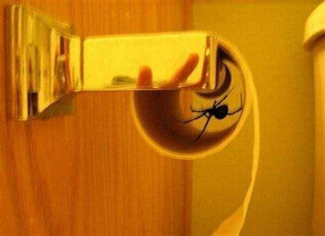 big spider  toilet paper roller buz
