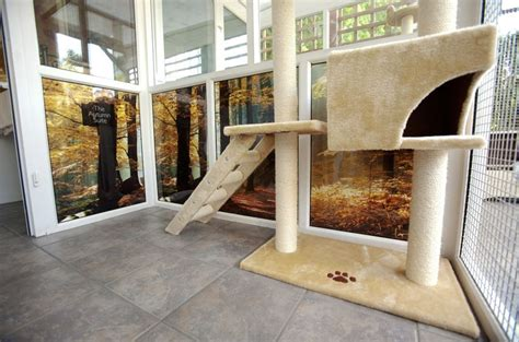 cat hotel animals longcroft cats luxury dog cattery unusual zone articles freeindex