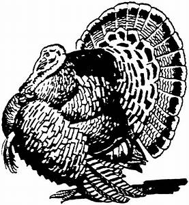 Free Turkey Coloring Pages