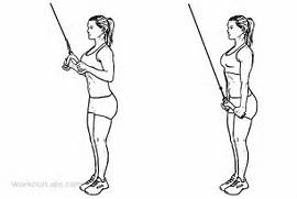 to exercise guide triceps cable pushdown primary muscle group triceps      Tricep Pulldown Vs Pushdown