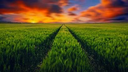 4k Scenery Grass Countryside Fields Wallpapers