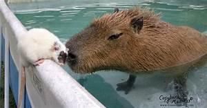 Pet Nutria | www.pixshark.com - Images Galleries With A Bite!