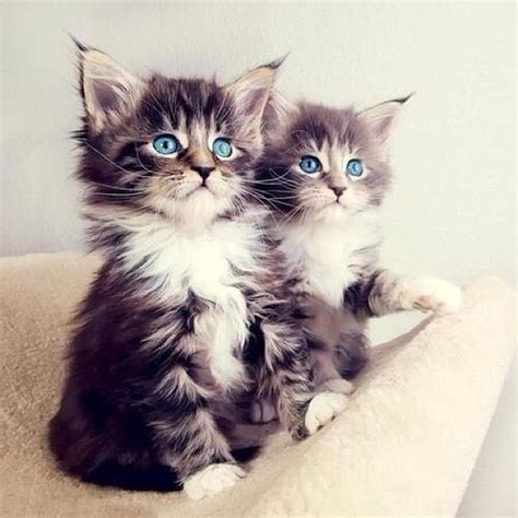 Cute Kittens Pictures, Photos, And Images For Facebook