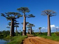 The Island of Madagascar is a Truly Unique Place - Demand ...