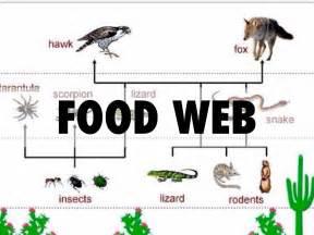 cuisine web ecosystems by ivan rangel
