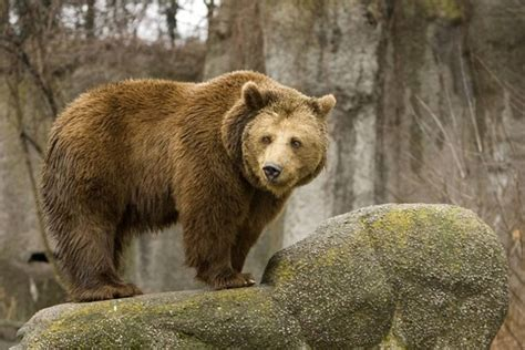 Виды медведей – описание и фото
