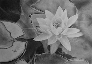 How to Draw a Water Lily — Online Art Lessons