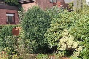 Kleinwüchsige Immergrüne Hecke : gemischte immergr ne hecke mein sch ner garten forum ~ Lizthompson.info Haus und Dekorationen