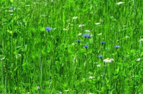 Im Rasen Loswerden by Klee Im Rasen Loswerden