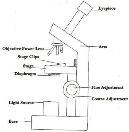 light microscope definition difference between light microscope and electron