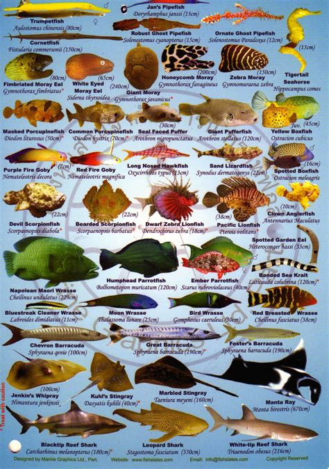 Corals And Marine Life Of Thailand