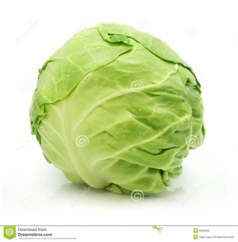 kubis merah of green cabbage vegetable isolated stock image