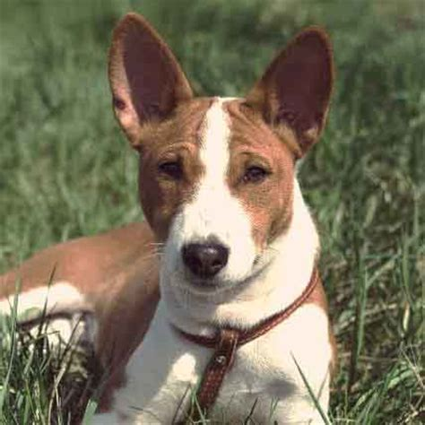 amazing short haired dog breeds  grooming