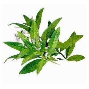 Verveine Plante Tisane : madame truc tisane de verveine ~ Mglfilm.com Idées de Décoration