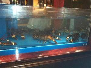 Live lobster tank - Picture of The Plough Inn ...