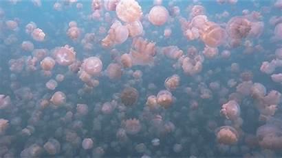 Jellyfish Aesthetic Pastel Lake Fish Nature Jelly