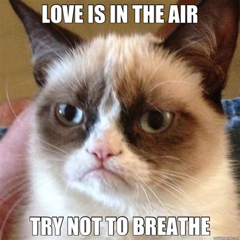 Mean Cat Memes - love is in the air try not to breathe mean cat quickmeme