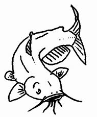 best catfish drawings ideas and images on bing find what you ll love