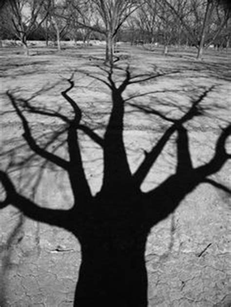 13 Best Trees casting shadows images in 2013 | Darkness