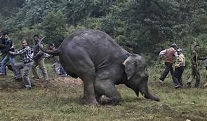 Elephant Tramples Poacher To Death In Zimbabwe: Report ...