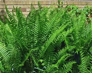 Farn Im Garten : hortensien pflanzen standort umpflanzen begleitpflanzen plantura ~ Orissabook.com Haus und Dekorationen