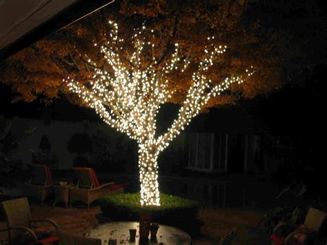 outdoor string lights trees images pixelmari