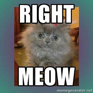 information about business cat meme right meow