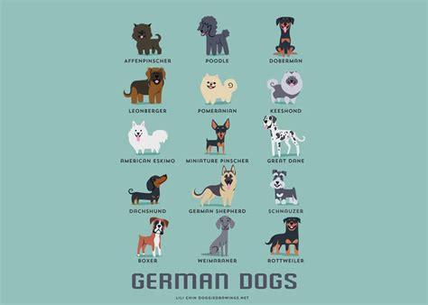 dog breeds   world explained   adorable