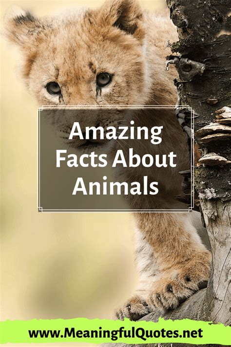 35+ Amazing Facts About Animals You Don't Know