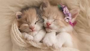 Cute Kittens Adorable Hd Wallpaper - Wallpapersfans.com
