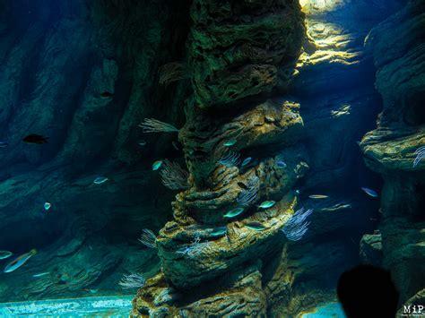 vid 233 o aquarium de banyuls sur mer bien plus qu un
