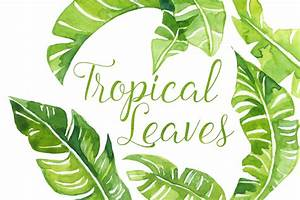 Leaf clipart palm leaves - Pencil and in color leaf ...