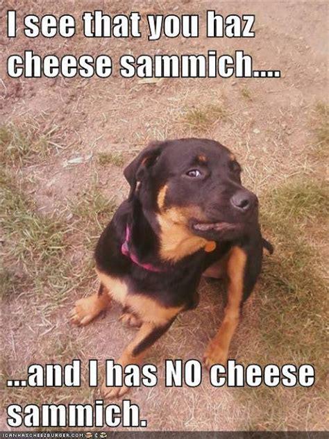 Animal Memes Funny - 30 funny animal captions part 4 30 pics amazing creatures