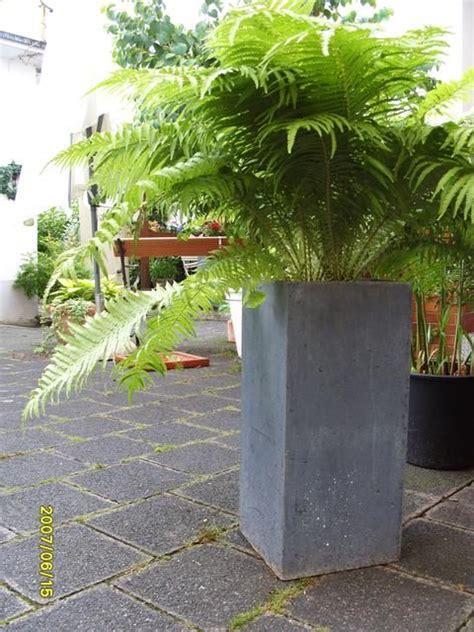 Topfpflanzen Für Den Garten by Welchen Farn F 252 R K 252 Bel Seite 3 Gartengestaltung
