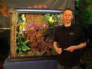 Pflanzen Terrarium Einrichten : reptilica das tropenterrarium youtube ~ Watch28wear.com Haus und Dekorationen