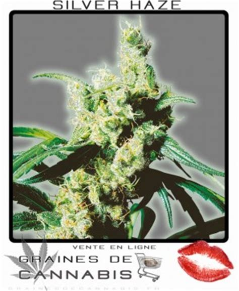 graines de cannabis la vari 233 t 233 cannabis la plus