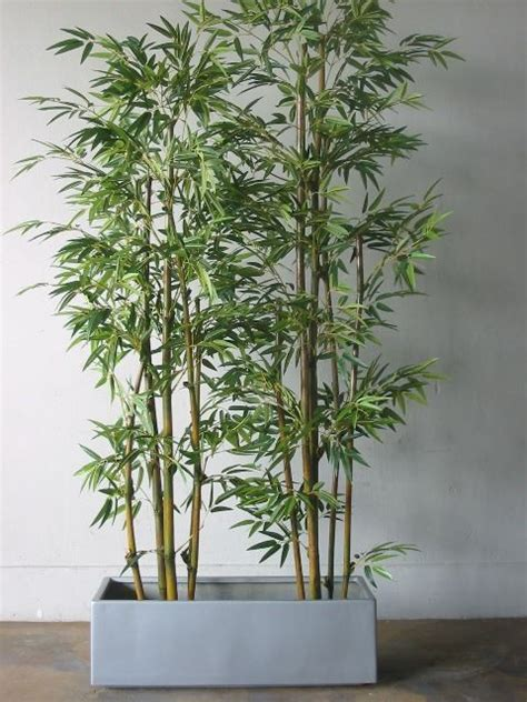 bamboo in pots for deck privacy do you all see a trend