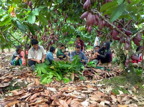 Laskar Belati, Menjaga Kakao Luwu Tetap Lestari