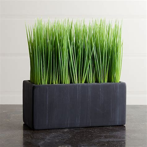 large potted grass crate  barrel