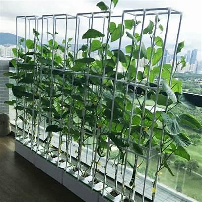 Hydroponic Kit System Pvc Planting Hydroponics Grow