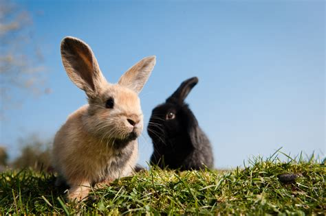 Rabbit Images How To Look After A Rabbit Rabbit Bedding Vaccinations