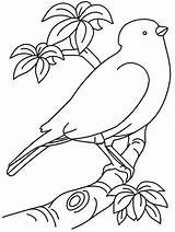 Coloring Pages Easy Printable Bird sketch template