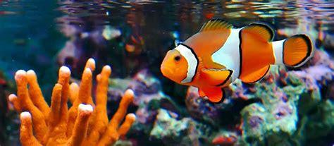 Menurut berlach dan ely (1971) mengemukakan bahwa media dalam proses pembelajaran. 13 Arti Mimpi Melihat Ikan, Makan Ikan Menurut Primbon Jawa