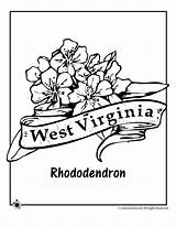 Coloring Flower Virginia West State Rhododendron Pages Drawing Indiana Printable Template Tattoo Flowers Classroomjr Woo Jr Adult Sketch Getdrawings sketch template