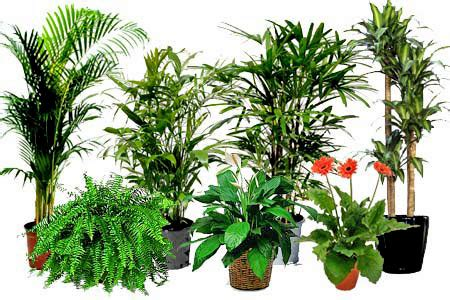 cleaner  purer air  air cleaning plants