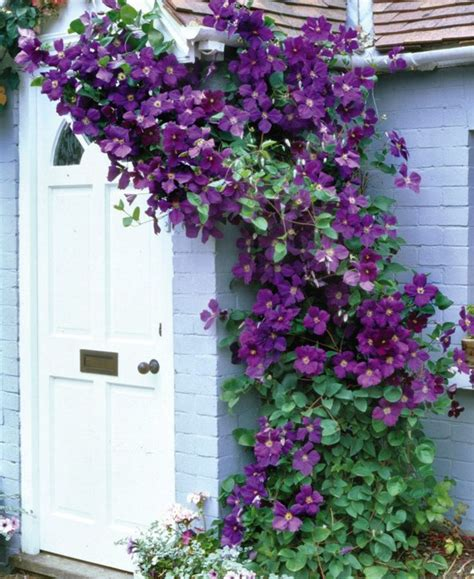 flowering climbing vines 13 best plants for hummingbirds images on pinterest backyard ideas garden ideas and
