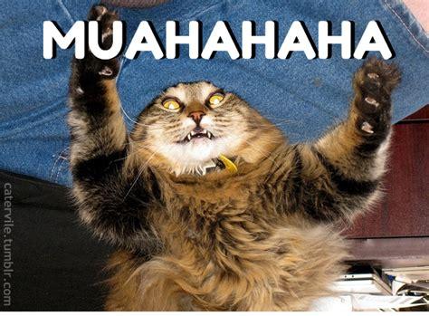 Muahaha Meme - evil cat meme tumblr image memes at relatably com